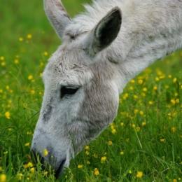 donkey-1415276_960_720
